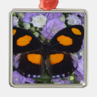 Sammamish Washington Photograph of Butterfly 4 Christmas Ornament