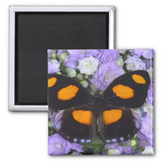 Sammamish Washington Photograph of Butterfly 4 Square Magnet