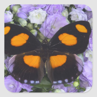 Sammamish Washington Photograph of Butterfly 4 Square Sticker