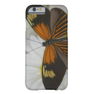 Sammamish Washington Photograph of Butterfly 50 Barely There iPhone 6 Case