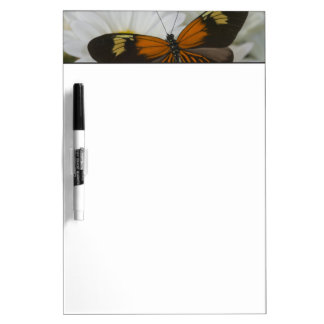 Sammamish Washington Photograph of Butterfly 50 Dry Erase Board
