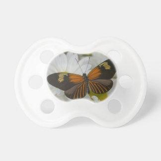 Sammamish Washington Photograph of Butterfly 50 Dummy
