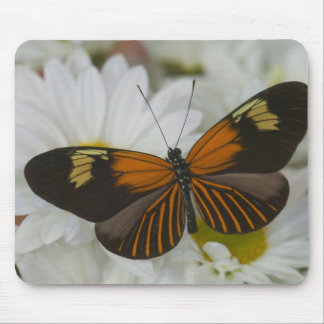 Sammamish Washington Photograph of Butterfly 50 Mouse Mat