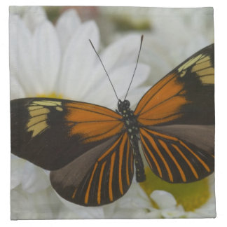 Sammamish Washington Photograph of Butterfly 50 Napkin