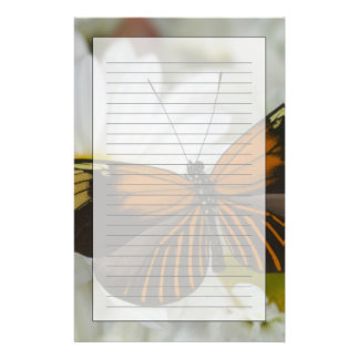 Sammamish Washington Photograph of Butterfly 50 Stationery Paper