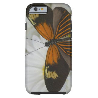 Sammamish Washington Photograph of Butterfly 50 Tough iPhone 6 Case