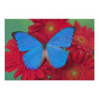 Sammamish Washington Photograph of Butterfly 51