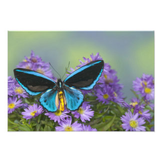 Sammamish Washington Photograph of Butterfly 51