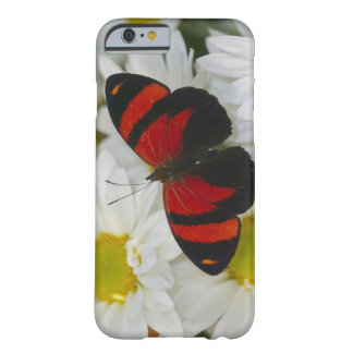 Sammamish Washington Photograph of Butterfly 51 Barely There iPhone 6 Case