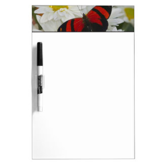 Sammamish Washington Photograph of Butterfly 51 Dry Erase Board