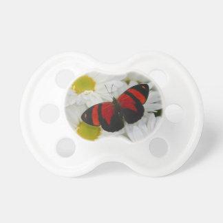 Sammamish Washington Photograph of Butterfly 51 Dummy