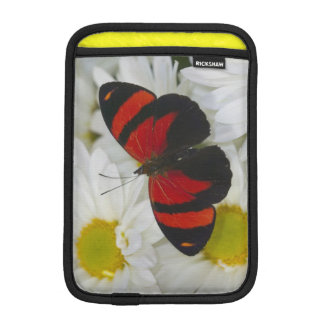 Sammamish Washington Photograph of Butterfly 51 iPad Mini Sleeve