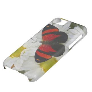 Sammamish Washington Photograph of Butterfly 51 iPhone 5C Case