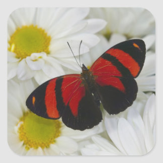 Sammamish Washington Photograph of Butterfly 51 Square Sticker