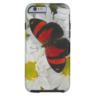 Sammamish Washington Photograph of Butterfly 51 Tough iPhone 6 Case