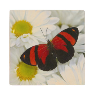 Sammamish Washington Photograph of Butterfly 51 Wood Coaster