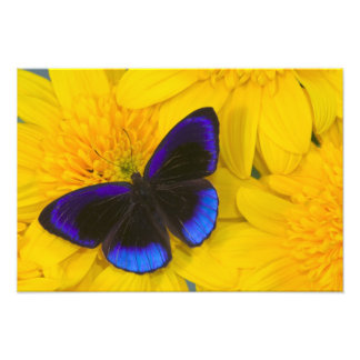 Sammamish Washington Photograph of Butterfly 52