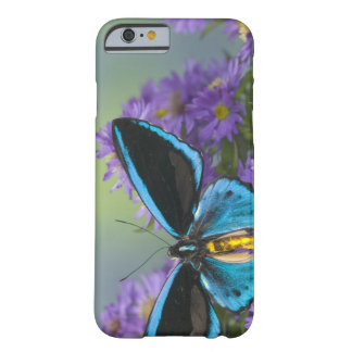Sammamish Washington Photograph of Butterfly 52 Barely There iPhone 6 Case