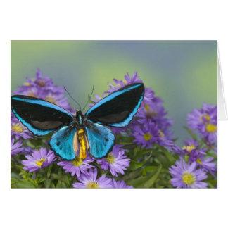 Sammamish Washington Photograph of Butterfly 52 Card
