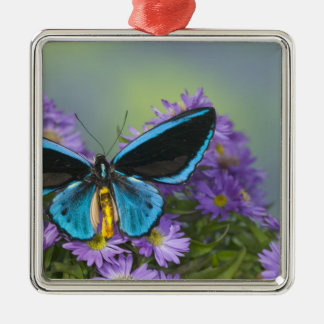 Sammamish Washington Photograph of Butterfly 52 Christmas Ornament