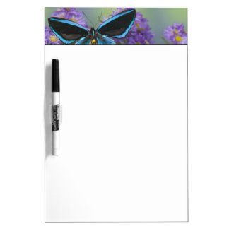 Sammamish Washington Photograph of Butterfly 52 Dry Erase Board