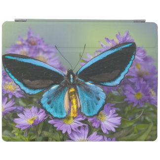 Sammamish Washington Photograph of Butterfly 52 iPad Cover