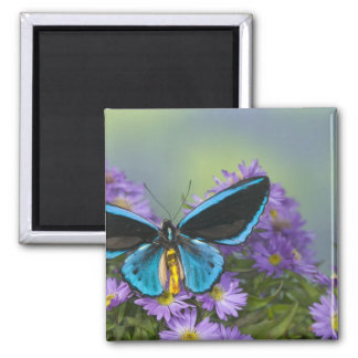 Sammamish Washington Photograph of Butterfly 52 Magnet