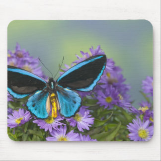 Sammamish Washington Photograph of Butterfly 52 Mouse Mat