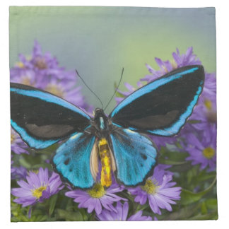 Sammamish Washington Photograph of Butterfly 52 Napkin