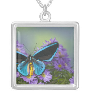 Sammamish Washington Photograph of Butterfly 52 Silver Plated Necklace