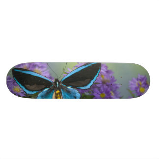 Sammamish Washington Photograph of Butterfly 52 Skate Deck