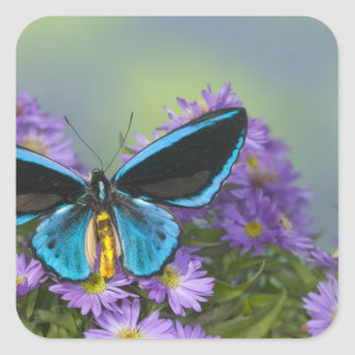 Sammamish Washington Photograph of Butterfly 52 Square Sticker