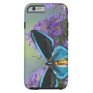 Sammamish Washington Photograph of Butterfly 52 Tough iPhone 6 Case