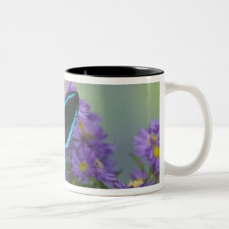 Sammamish Washington Photograph of Butterfly 52 Two-Tone Coffee Mug