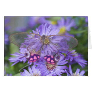 Sammamish Washington Photograph of Butterfly 53 Card