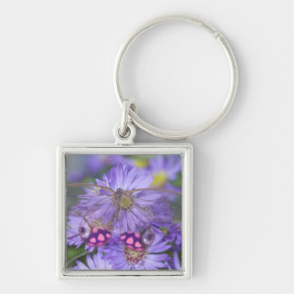 Sammamish Washington Photograph of Butterfly 53 Key Ring