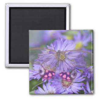 Sammamish Washington Photograph of Butterfly 53 Square Magnet
