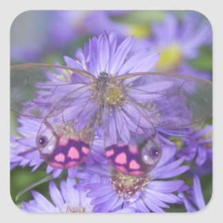 Sammamish Washington Photograph of Butterfly 53 Square Sticker