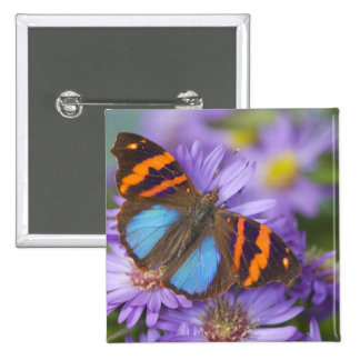 Sammamish Washington Photograph of Butterfly 54 15 Cm Square Badge