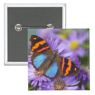 Sammamish Washington Photograph of Butterfly 54 Pin