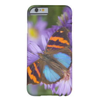 Sammamish Washington Photograph of Butterfly 54 Barely There iPhone 6 Case