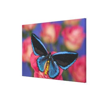Sammamish Washington Photograph of Butterfly 54 Canvas Print