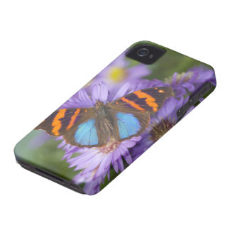 Sammamish Washington Photograph of Butterfly 54 iPhone 4 Cases