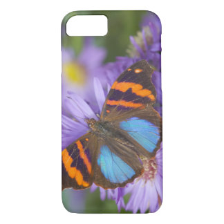 Sammamish Washington Photograph of Butterfly 54 iPhone 8/7 Case
