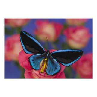 Sammamish Washington Photograph of Butterfly 54 Poster