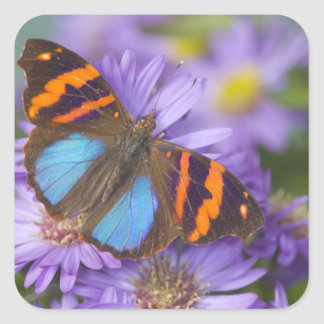 Sammamish Washington Photograph of Butterfly 54 Square Sticker