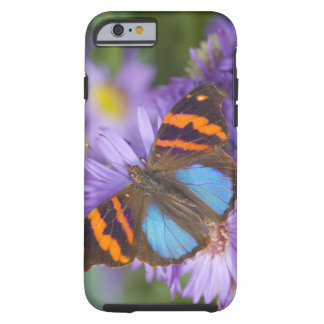 Sammamish Washington Photograph of Butterfly 54 Tough iPhone 6 Case