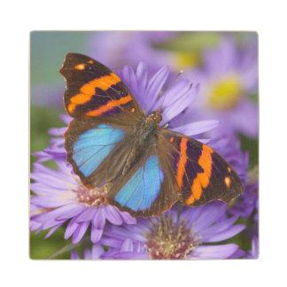 Sammamish Washington Photograph of Butterfly 54 Wood Coaster