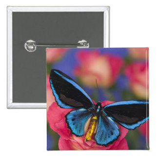 Sammamish Washington Photograph of Butterfly 55 15 Cm Square Badge