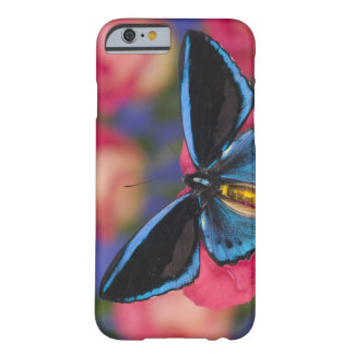 Sammamish Washington Photograph of Butterfly 55 Barely There iPhone 6 Case